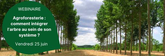 Les intérêts du pâturage dans les systèmes viticoles